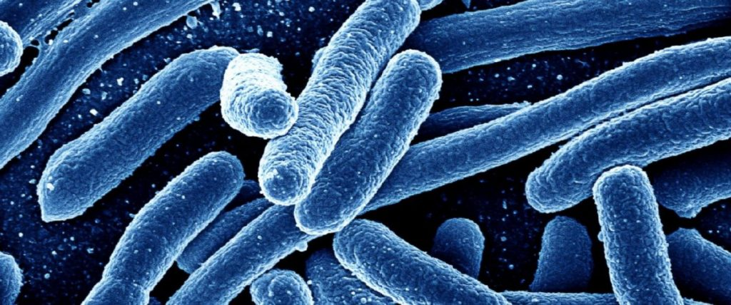 mikroogranizma 1024x428 - Mikrop Teorisi ve Tarihte Mikropların Keşfi Bilgi ve Haber