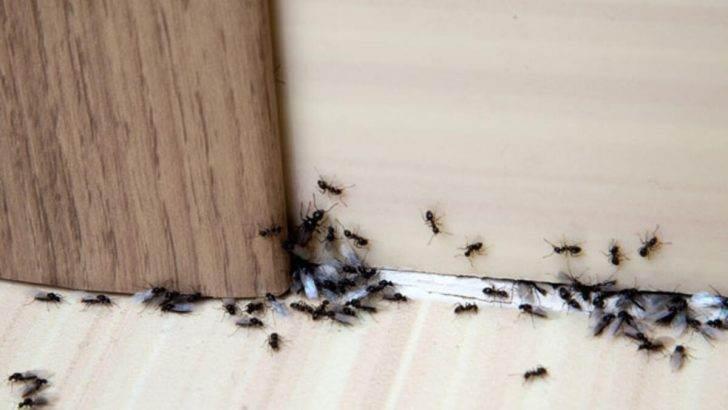 Evdeki Karınca ve Haşareler Nasıl Kovulur
