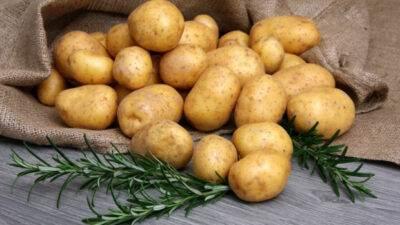 Patateslerin Çürümemesi İçin Ne Yapmak Lazım