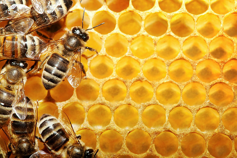 Arı Zehirinin Faydaları, Sağlığa Olumlu Etkileri