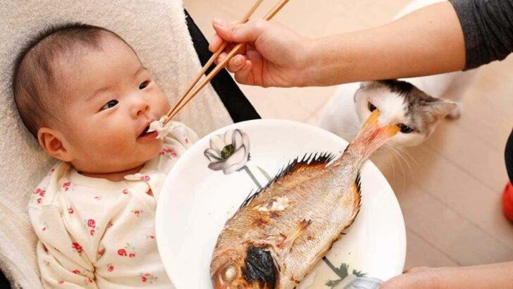 Bebeklere En Erken Ne Zaman Balık Verilir?