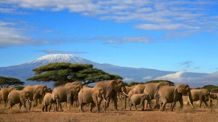 Fillerin İbret Verici Ölümü!