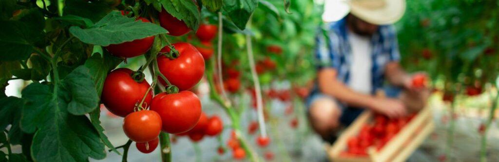 Organik Gıda Nedir? Nasıl Üretilir?