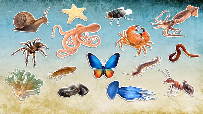 Hayvanlar Kaça Ayrılır Nelerdir?