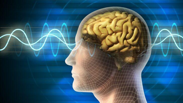 İnsan Beyninin Yapısı ile İlgili Temel Bilgiler